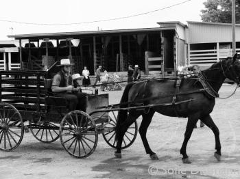 Amish farmer at Kidron Auction