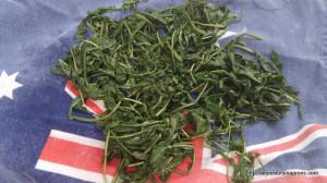 Dandelion Greens after cooking