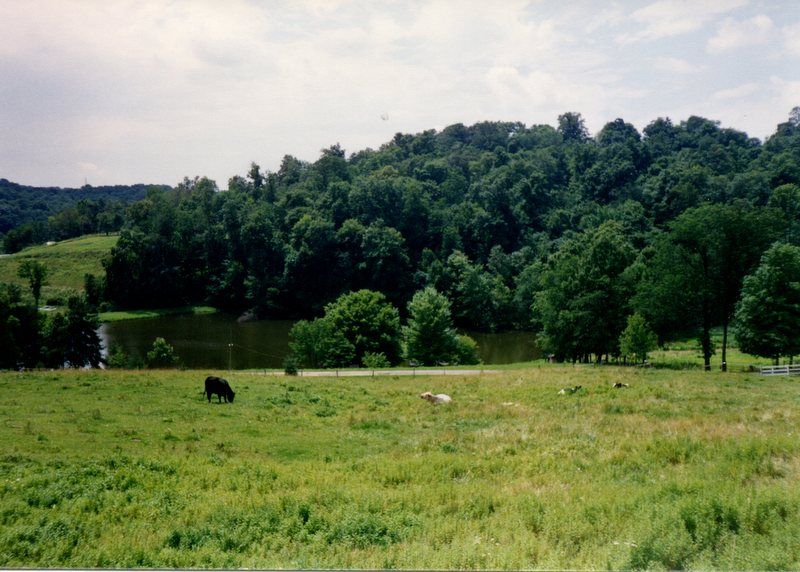 Ohio Dairy Cattle